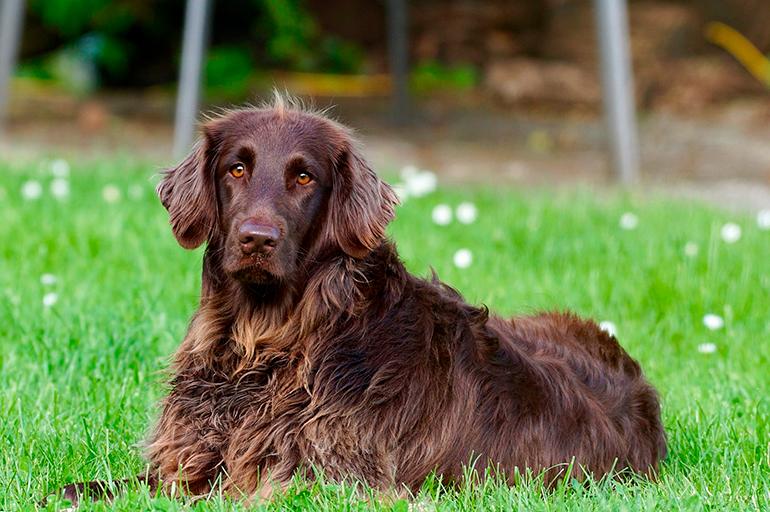 perro-sano-sobre-la-hierba